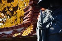 ■■ 専念寺 銀杏 2018 [プチ絨毯編] - Tatu-tatu兄やんBlog