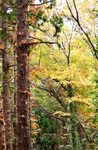 森の探索会 - つれづれ日記