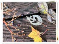 秋の落ち葉は - 暮らしの中で