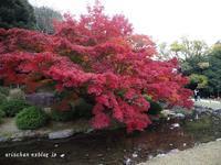栗林公園の紅葉2018♫ - アリスのトリップ