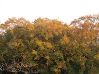 黄昏の弘明寺公園 - 神奈川徒歩々旅