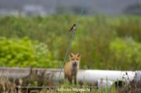 夏の思い出 - ekkoの --- four seasons --- 北海道