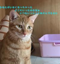 続こうね - 八幡地域猫を考える会