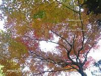講談社野間記念館へ~椿山荘と関口芭蕉庵の紅葉 - 風と花を紡いで