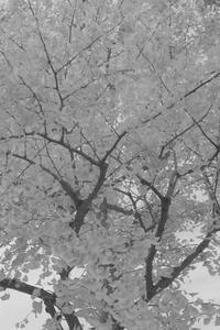 白い冬 - はーとらんど写真感