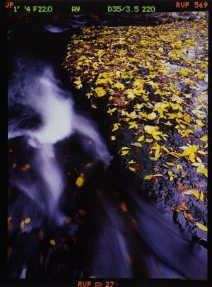 落ち葉の渓流 - Wの視点