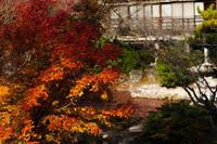 紅葉を楽しむ - 小豆島PHOTOGRAPH(ココロで感じる写真・ココロの目を開眼!)