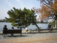 昨日(12月2日)土曜日の大濠公園 - 美由紀の六角オセロ ラブ