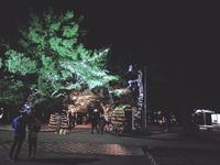 大濠公園のクリスマスイルミネーション♪ - 美由紀の六角オセロ ラブ