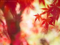 思い込みの赤 - M2_pictlog