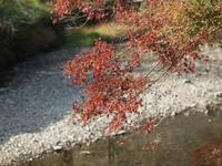 『伊自良湖の秋風景』 - 自然風の自然風だより