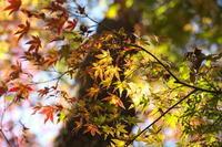 光と紅葉 - tokoのblog