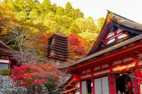 談山神社(奈良) - *花音の調べ*