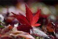 ●● 季節外れ ●● - kameのフォトブック2