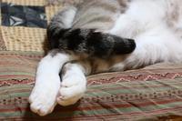 正しいねこの寝方 - ぎんネコ☆はうす
