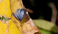 落ち凪 - 紀州里山の蝶たち