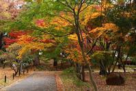 浄真寺の紅葉 - Photolog@Hello folks!
