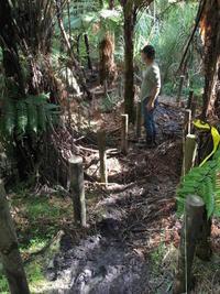森からビーチへ、トレール作り/Building a Trail in Our Forest - アメリカからニュージーランドへ