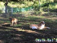 こざこざ - Walk Up! Walk Up!!