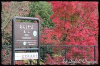 2年ぶりの再会~in Arashiyama... - Salt&Orange時々Pepper
