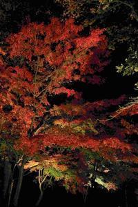 近所の紅葉(最上山もみじ公園 ← 続き) - ファインダーの中に惹かれて