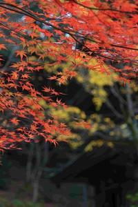 「そうだ丹波、いこう」(青垣町 高源寺) - ファインダーの中に惹かれて