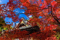 京の紅葉2018彩りの鍬山神社 - 花景色-K.W.C. PhotoBlog