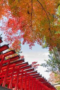 神社と紅葉 - 休日PHOTOブログ
