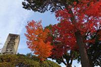 京都 豊國神社 - アンチLEICA宣言