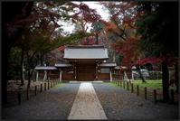 平林寺 -1 - Camellia-shige Gallery 2