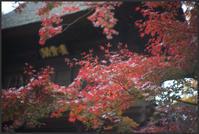 平林寺 -2 - Camellia-shige Gallery 2