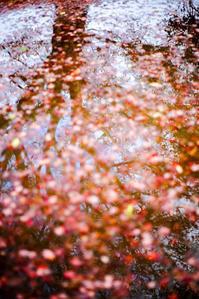 残秋 - 気ままに写生活