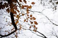 レンコンみたいな葉(笑) - BobのCamera