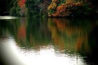 溜池公園にて・・ - 花々の記憶    happy_momo