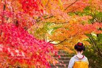 紅葉 - *花音の調べ*