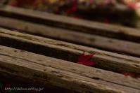 漫才、俳句、紅葉のこと - 白雪ばぁばのかんづめ
