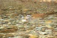 赤川詣 - 「 ボ ♪ ボ ♪ 僕らは釣れない中年団 ♪ 」