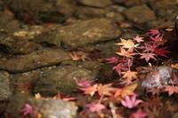 紅葉狩り - ecocoro日和