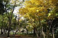 林試の森公園の紅葉 - オートクチュールの旅日記