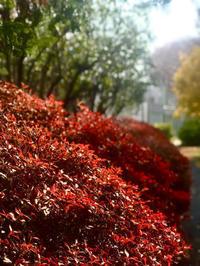 紅葉の美しさ - 00aa恵比寿美容室  Hana★癒し系ヘアサロン★《ヘアー・ハナ》