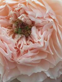 WABARA・わばら・和ばら - お花に囲まれて