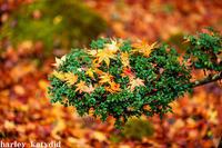 落ち葉のオブジェ - harley-katydid