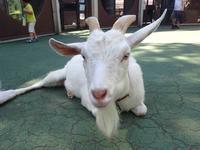 市川市動植物園の動物たち~誰もヤマアラシに気がつかない - 続々・動物園ありマス。