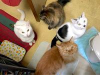 お昼ごはんを待つネコたち - Lucky★Dip666-Ⅳ