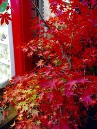 美しい紅葉☆彡 - aile公式ブログ