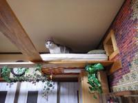 猫ロフトをふかふかに - ねこっかぶりねこ2