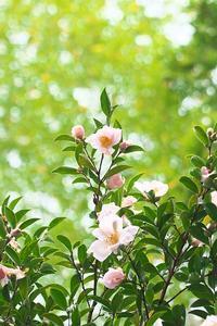 妙楽寺の花たち - 但馬・写真日和