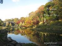肥後細川庭園~秋から冬へ  - 風と花を紡いで