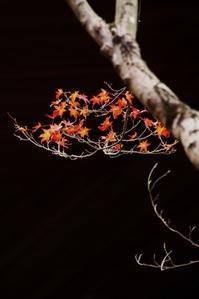 晩秋紅葉 - ♪一枚のphotograph♪
