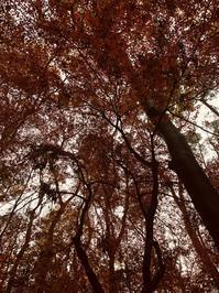 倒れた巨木が考えさせてくれた - サンタラ・砂田の別冊☆スナダ